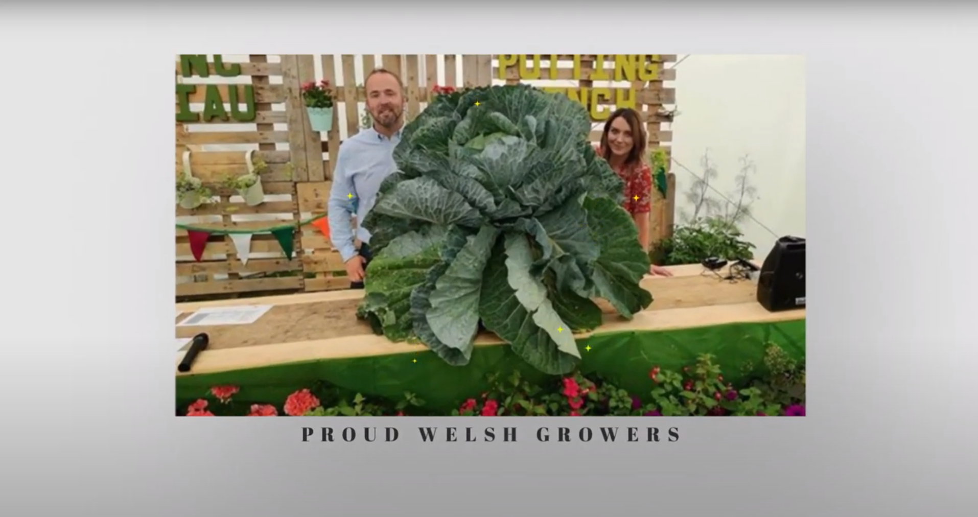 Giant Cabbage Growth Time Lapse – Giant Veg UK